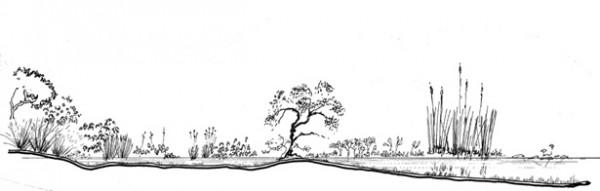 Florida Freshwater Marsh Elevation Drawing