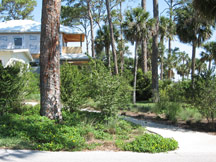 Retrofit landscape for upscale residence in Volusia County. Design by David Drylie, Green Images Native Landscape Plants.