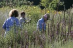 Customers in wildflower area of native nursery field