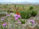 centralsandhillwildflowers