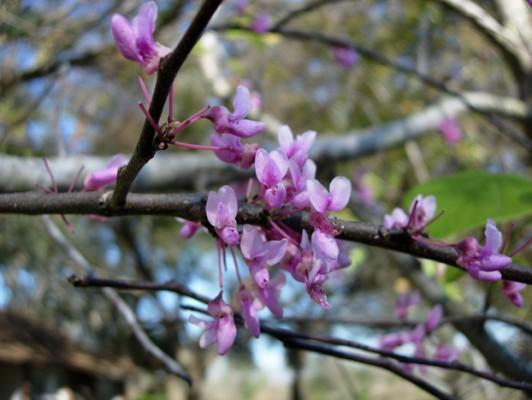 & raquo; Curso CEU: Arboles y Arbustos Nativos para el Centro y Norte de la Florida, Zonas 8-9 | Asociación de viveros nativos de la Florida | FANN