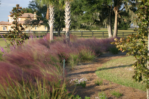 rightplantrightplacephoto - CEU Course: Right Plants, Right Place — All Native Florida