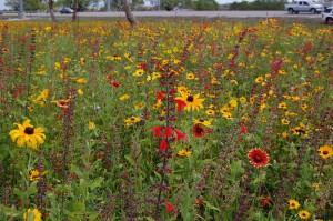 Wildflower area along Florida Turnpike in Broward County. Photo courtesy of Florida's Turnpike Enterprise, Florida Department of Transportation.
