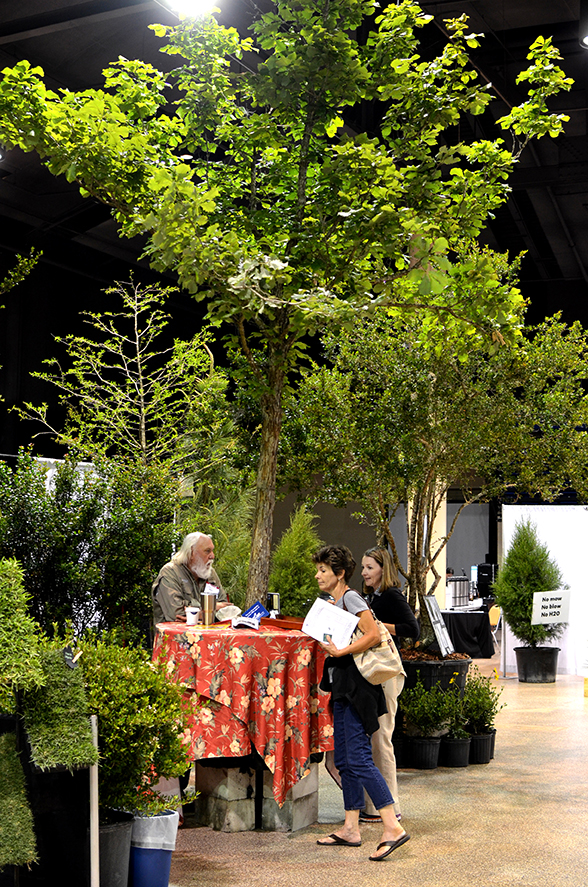Stardust Farm's big Swamp Chestnut Oak (Quercus michauxii) enchanted everyone.