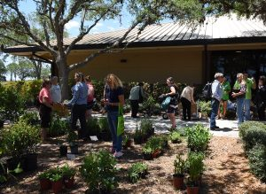 Public plant sale outside, organized by our conservation partner Florida Native Plant Society.