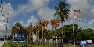 University of Florida IFAS Fort Lauderdale Research and Education Center with diseased Sabal Palms
