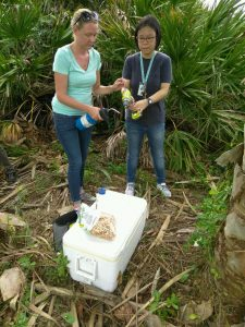 Sterilizing the drill bit before taking core sample from palm.  L-R: Biological Scientist Ericka Helmick and PhD student De-Fen Mou.