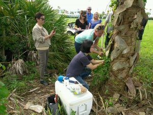 The FLREC Lab Team takes core samples while attendees observe. L-R: lady in sunglasses recording with her phone is  Lorelie Agbagala, a Visiting Scholar from the Phillippines assisting with research, squatting in foreground is De-Fen Mou and bending over behind her is Ericka Helmick.