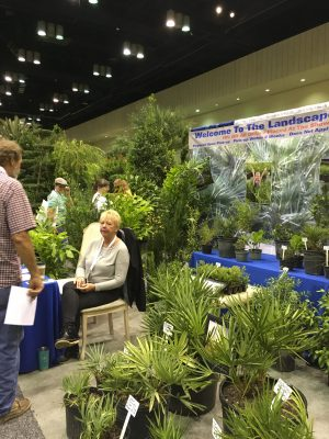 Pat Hastings with Hastings Nursery had a lot of customers looking for those Palmettos.