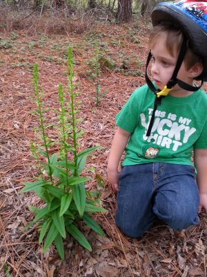 Jason Sharp's son Christopher with native orchid