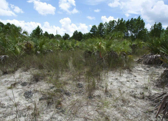 Globally imperiled Pine Rockland habitat. Photo by Jonathon Mays, FWC.